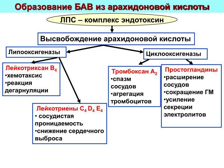 Образование БАВ из арахидоновой кислоты