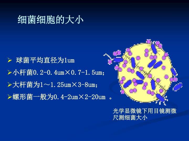 细菌细胞的大小