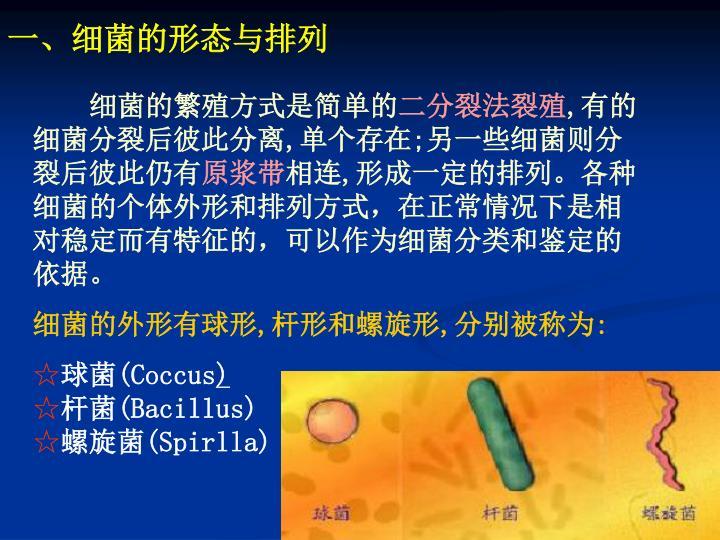 一、细菌的形态与排列
