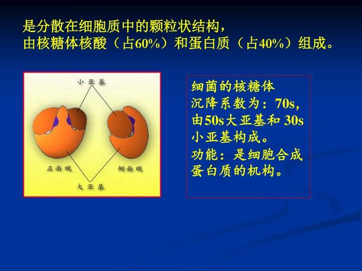 是分散在细胞质中的颗粒状结构,