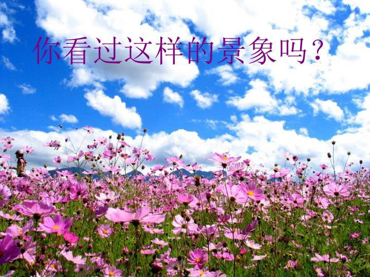 一幅成片野花的图,二月兰、金莲花、胭脂花