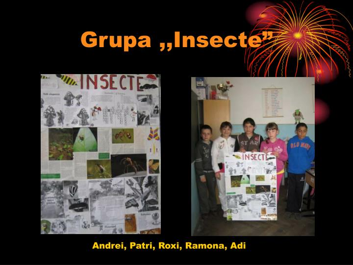 "Grupa ,,Insecte"""