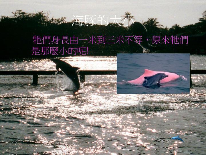 海豚的大小