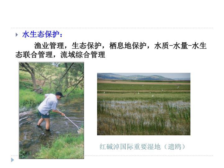 红碱淖国际重要湿地(遗鸥)