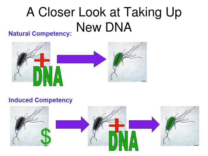 A Closer Look at Taking Up New DNA