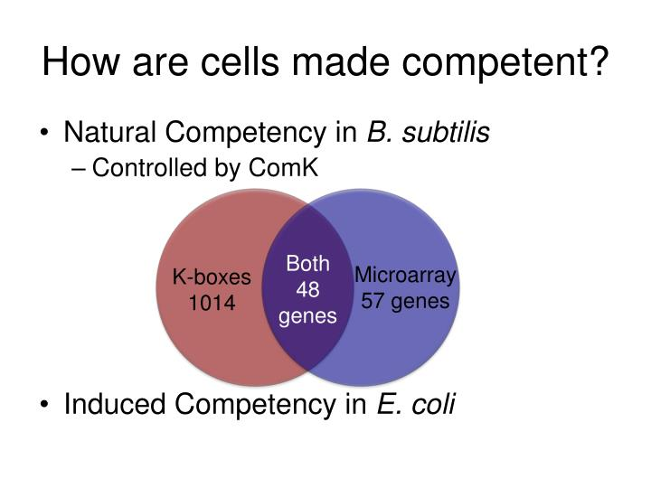 How are cells made competent?