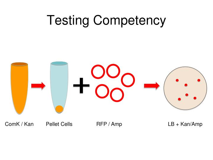 Testing Competency