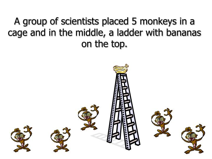 A group of scientists placed 5 monkeys in a cage and in the middle, a ladder with bananas on the top...