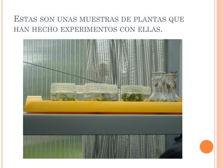 Estas son unas muestras de plantas que han hecho experimentos con ellas.