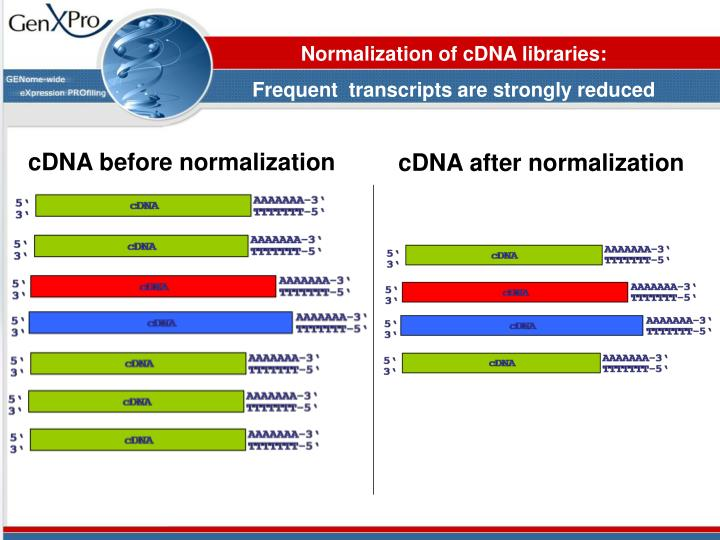 Normalization of cDNA libraries: