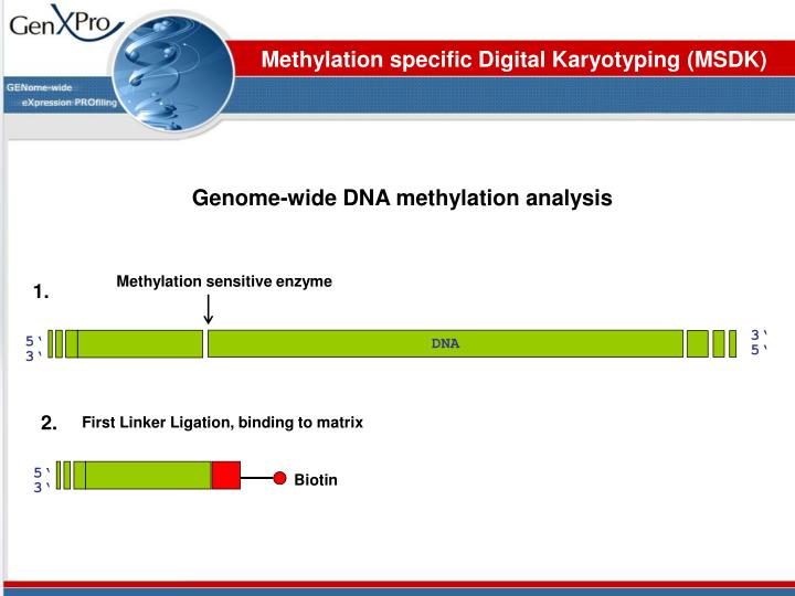 Methylation specific Digital Karyotyping (MSDK)