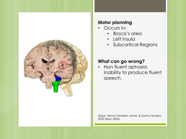Ppt functional neuroanatomy of language and its for Motor planning disorder symptoms