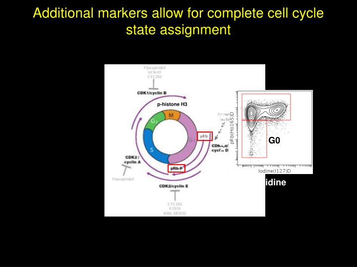 Additional markers allow for complete cell cycle state assignment