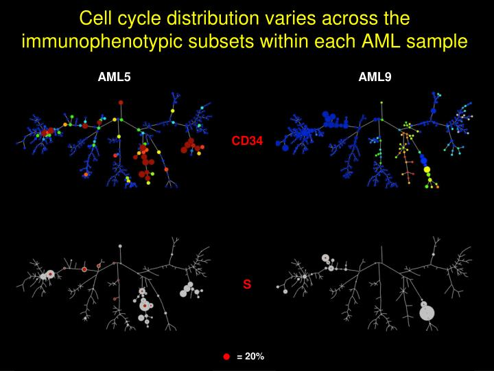 Cell cycle distribution varies across the immunophenotypic subsets within each AML sample
