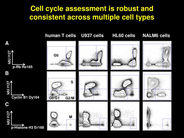 Cell cycle assessment is robust and consistent across multiple cell types