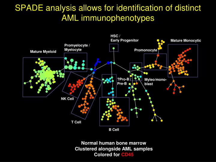 SPADE analysis allows for identification of distinct AML
