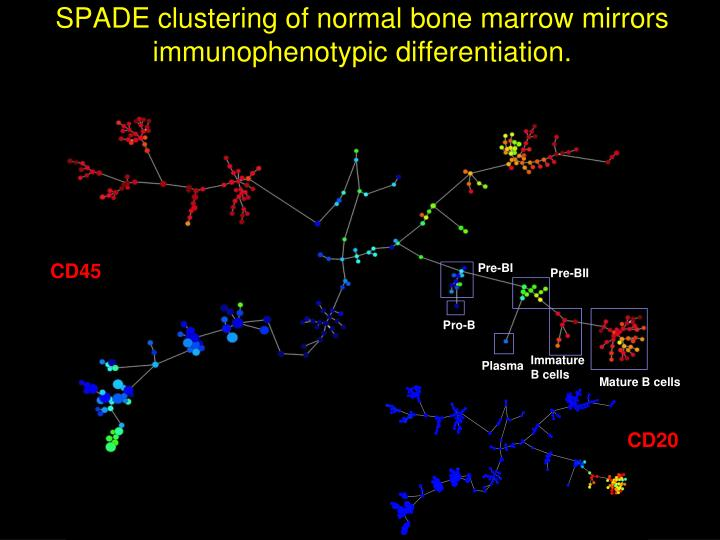 SPADE clustering of normal bone marrow mirrors immunophenotypic differentiation.