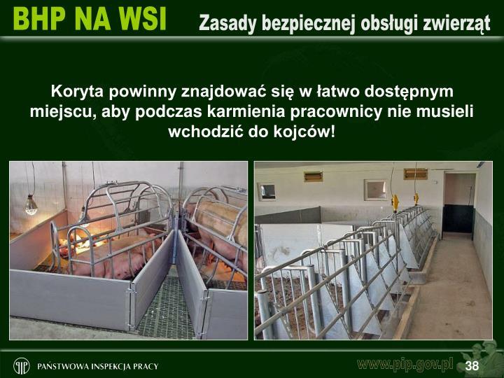 Koryta powinny znajdować się w łatwo dostępnym miejscu, aby podczas karmienia pracownicy nie musieli wchodzić do kojców!