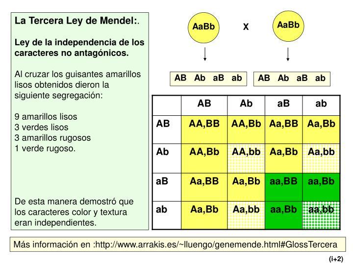 La Tercera Ley de Mendel: