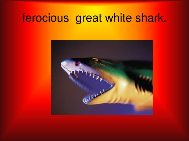 Ferocious great white shark