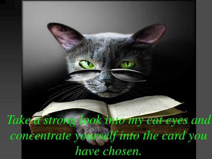 Take a strong look into my cat eyes and concentrate yourself into the card you have chosen.
