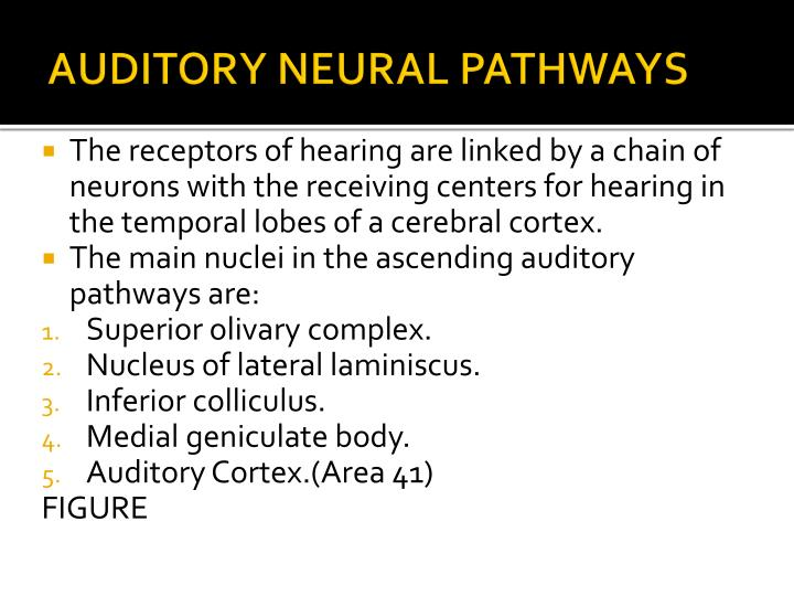 AUDITORY NEURAL PATHWAYS
