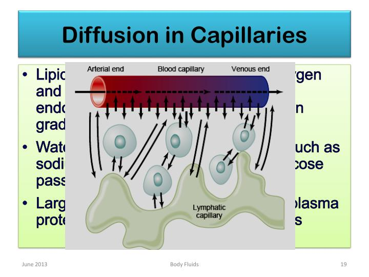 Diffusion in Capillaries