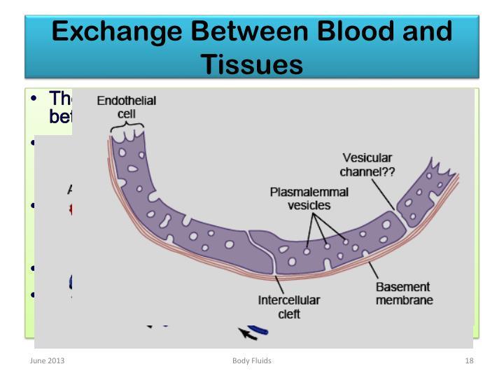 Exchange Between Blood and Tissues