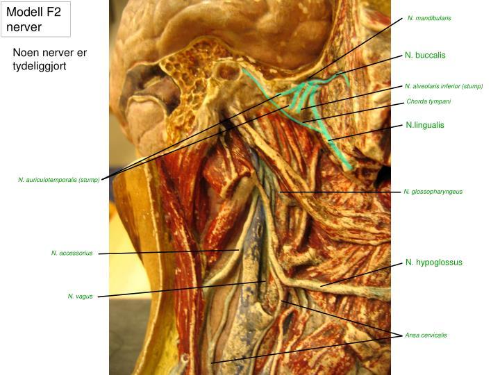 Modell F2 nerver