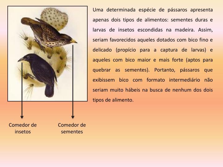 Uma determinada espécie de pássaros apresenta apenas dois tipos de alimentos: sementes duras e larvas de insetos escondidas na madeira. Assim, seriam favorecidos aqueles dotados com bico fino e delicado (propício para a captura de larvas) e aqueles com bico maior e mais forte (aptos para quebrar as sementes). Portanto, pássaros que exibissem bico com formato intermediário não seriam muito hábeis na busca de nenhum dos dois tipos de alimento.