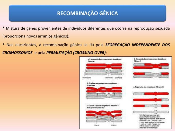 RECOMBINAÇÃO GÊNICA