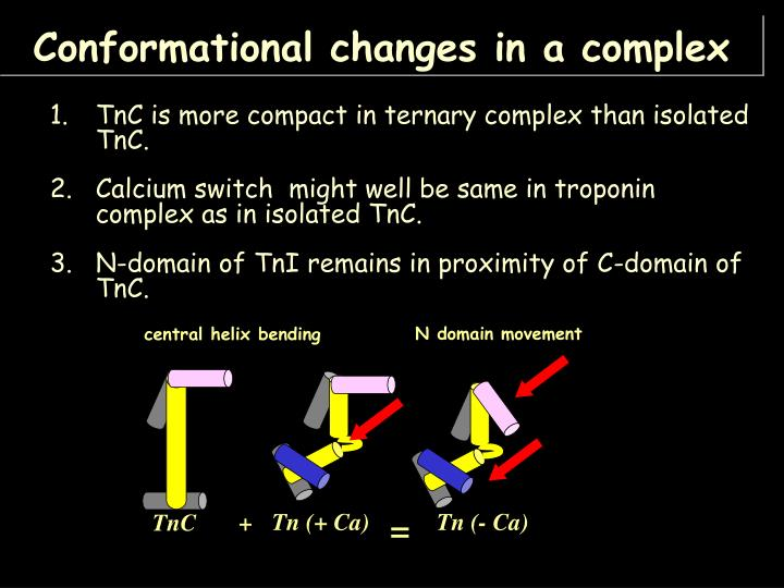 TnC is more compact in ternary complex than isolated TnC.