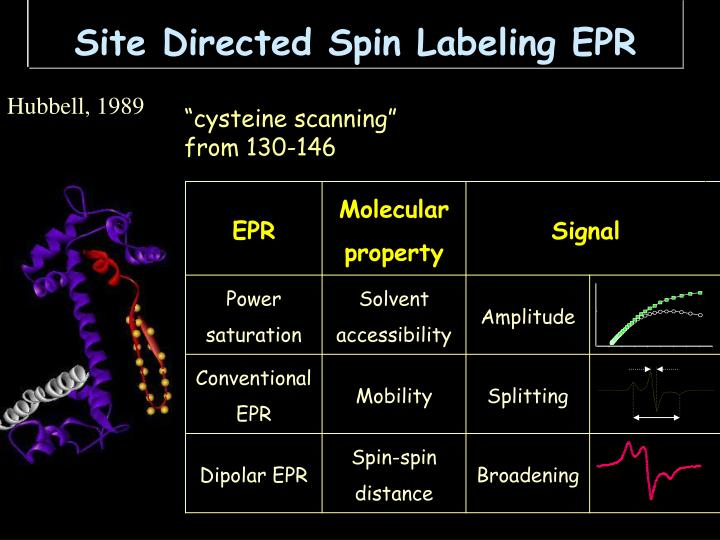 Site Directed Spin Labeling EPR