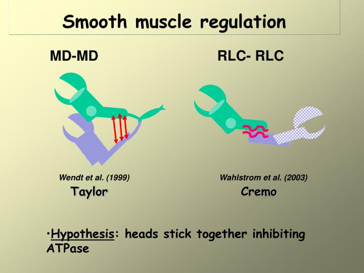 Smooth muscle regulation