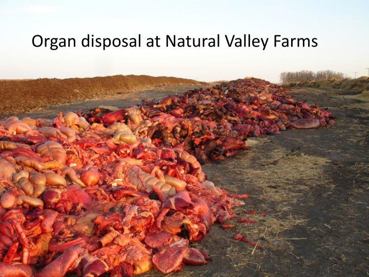 Organ disposal at Natural Valley Farms