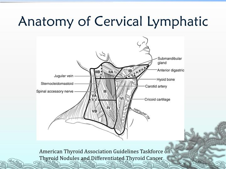 Anatomy of Cervical Lymphatic
