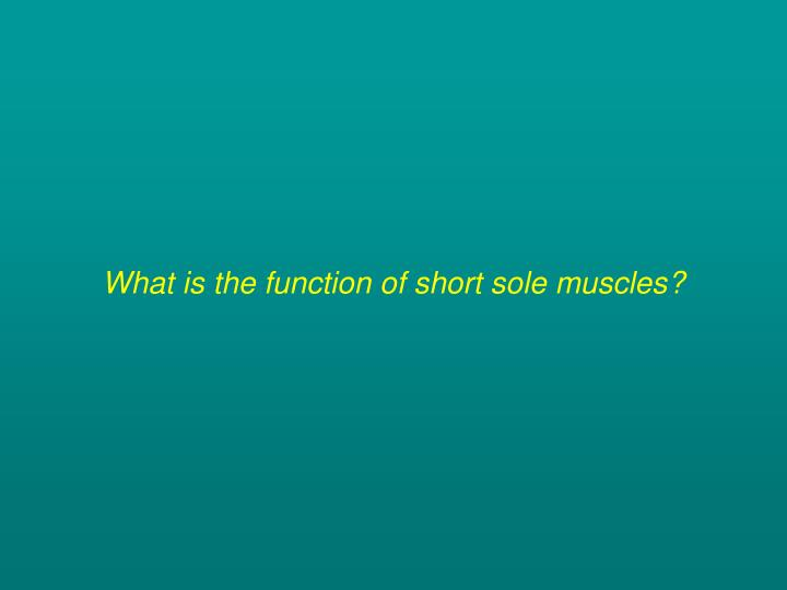 What is the function of short sole muscles
