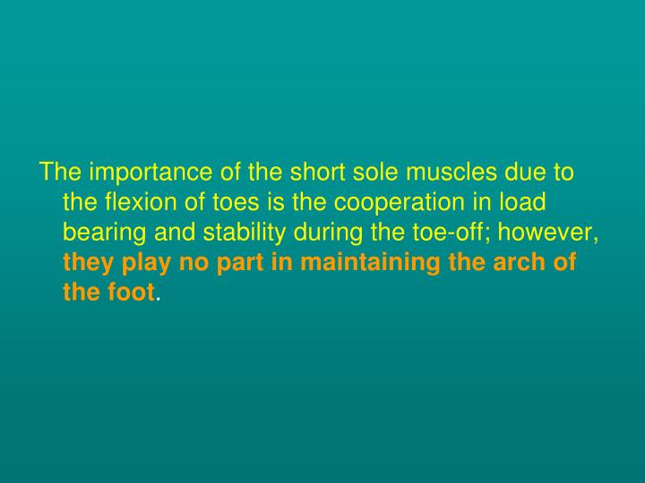 The importance of the short sole muscles due to the flexion of toes is the cooperation in load bearing and stability during the toe-off; however,