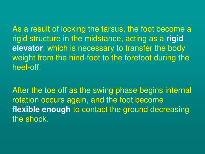 As a result of locking the tarsus, the foot become a rigid structure in the