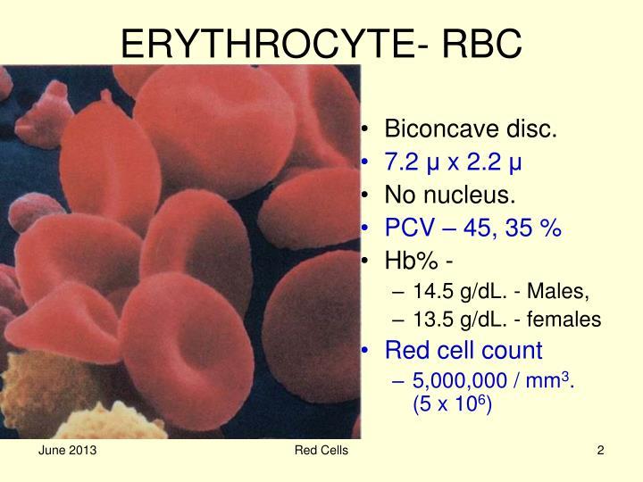 ERYTHROCYTE- RBC