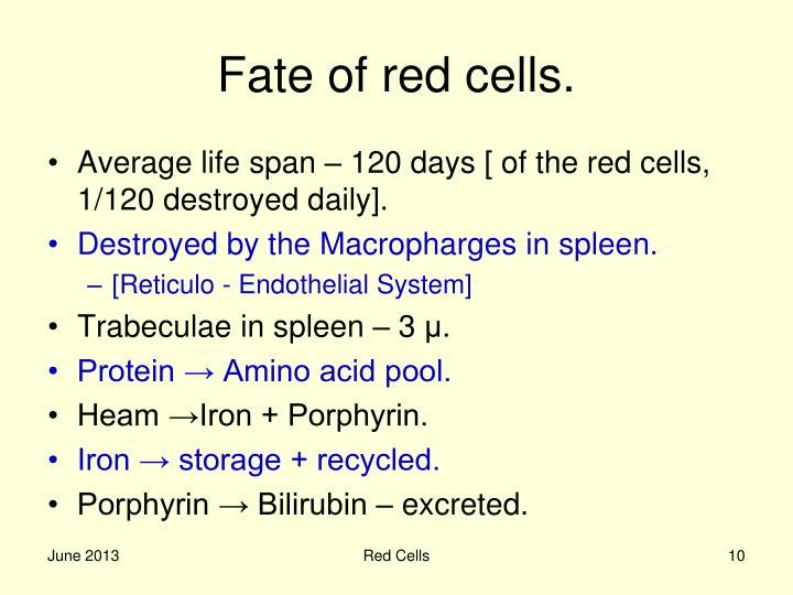 Fate of red cells.