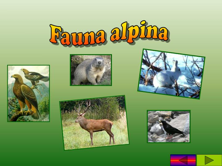 Fauna alpina