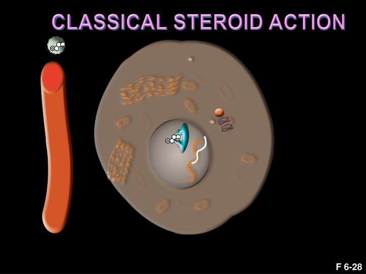 CLASSICAL STEROID ACTION