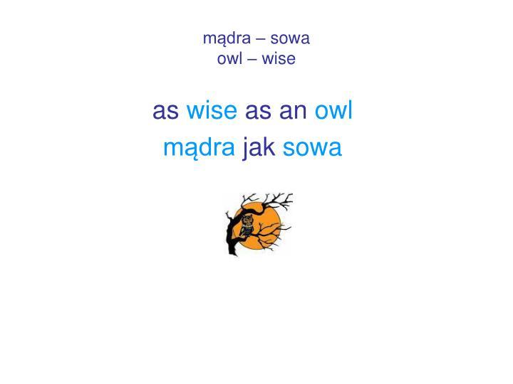 mądra – sowa