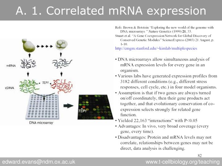A. 1. Correlated mRNA expression