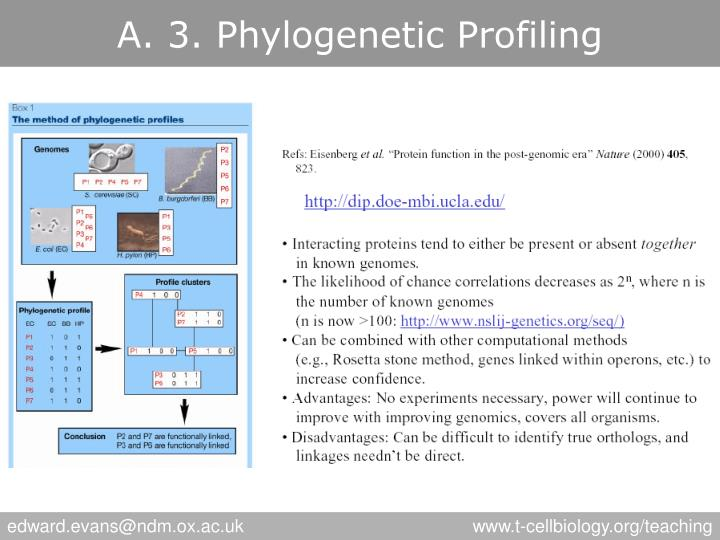 A. 3. Phylogenetic Profiling