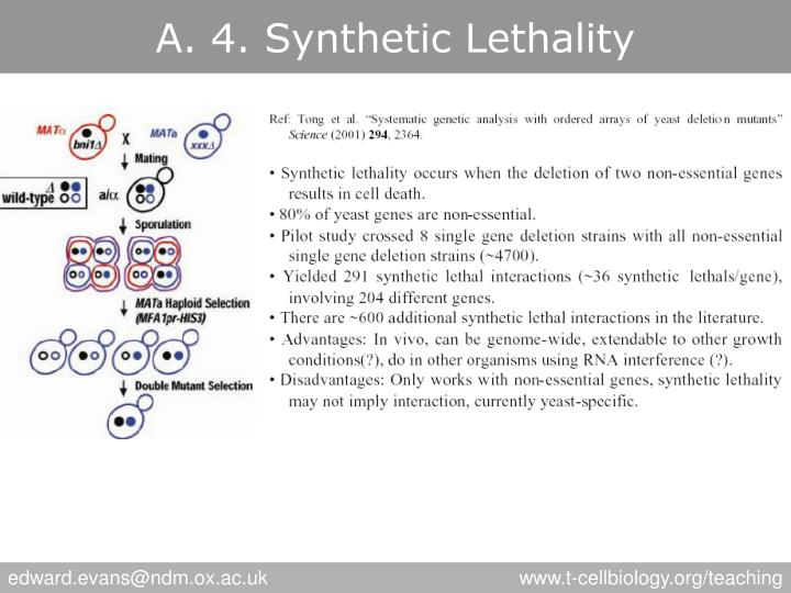 A. 4. Synthetic Lethality