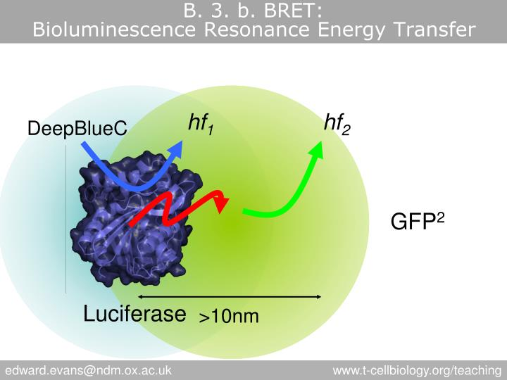 B. 3. b. BRET: