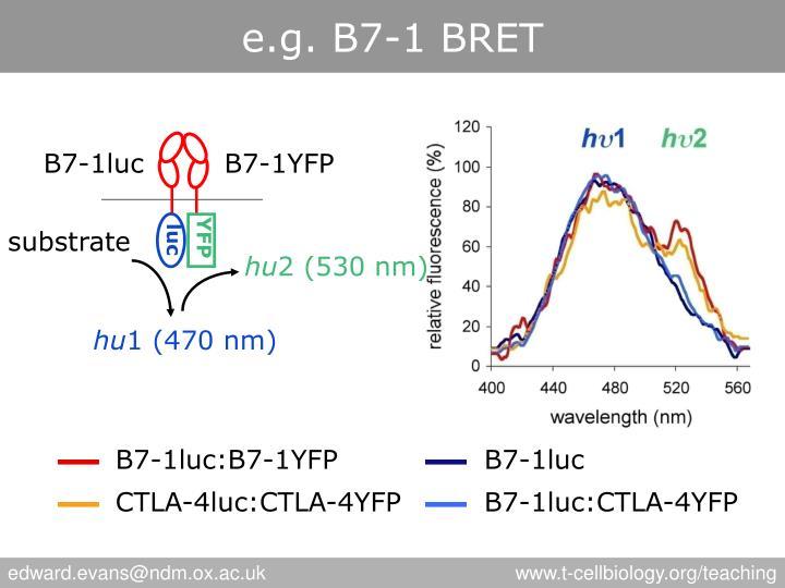 e.g. B7-1 BRET