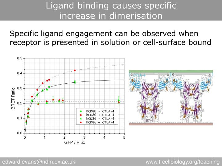 Ligand binding causes specific